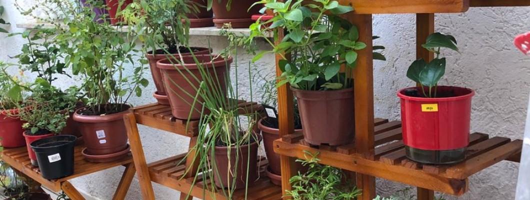 Suas Plantas em outro nível