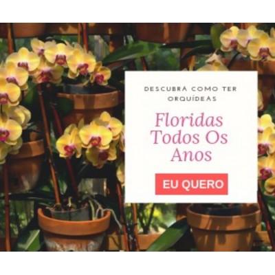 Como Fazer Sua Orquídea Florir - O Guia Completo