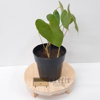 Suporte redondo para Plantas imagem